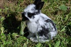Kaniner på ängen fotografering för bildbyråer