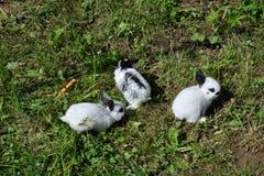 Kaniner på ängen royaltyfri fotografi