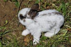 Kaniner på ängen royaltyfri foto