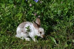 Kaniner på ängen arkivfoton