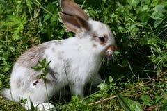 Kaniner på ängen royaltyfri bild