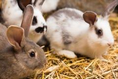 Kaniner på buren arkivfoton