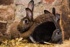 Kaniner på buren arkivbild