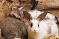 Kaniner på buren fotografering för bildbyråer