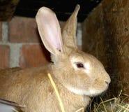 Kaniner på djur lantgård Royaltyfri Fotografi