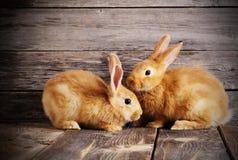 Kaniner på träbakgrund Arkivbild
