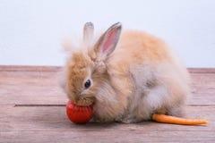 Kaniner på trägolv, morötter, gurkor, tomater och trummor på trä arkivbilder
