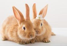Kaniner på vit bakgrund Royaltyfri Bild