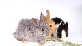 Kaniner p? en vit bakgrund arkivfilmer