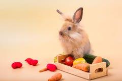 Kaniner p? tr?golvmor?tter, gurkor, tomater och trummor p? tr?golv royaltyfri fotografi