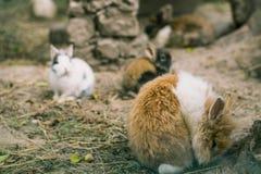 kaniner Små kaniner fotografering för bildbyråer