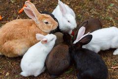 Kaniner som äter fodret på cratchen Arkivbild
