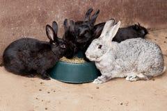 Kaniner som äter rabittmat Royaltyfri Foto