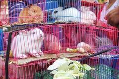 Kaniner som tas till marknaden Royaltyfria Bilder