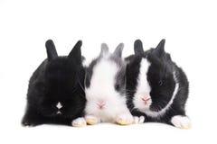 kaniner tre arkivbild