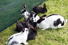 Kaniner utanför Royaltyfri Fotografi