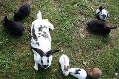 Kaniner utanför Arkivbild