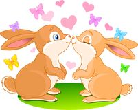 kaninförälskelse Arkivfoton