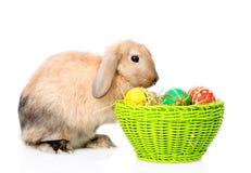 Kaninsammanträde med korgeaster ägg bakgrund isolerad white Arkivfoton