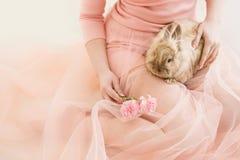Kaninsammanträde på benen av kvinnor Royaltyfria Foton