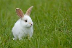 kaninwhite