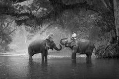 KANJANABURI THAILAND-JANUARY 30: Mahouten visar att spela med en elefant i en flod på Sangkhlaburi, Kanjanaburi, Thailand på Janu Arkivfoton