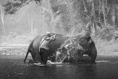 KANJANABURI THAILAND-JANUARY 30: Mahouten visar att spela med en elefant i en flod på Sangkhlaburi, Kanjanaburi, Thailand på Janu Fotografering för Bildbyråer