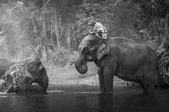 KANJANABURI THAILAND-JANUARY 30: Mahouten visar att spela med en elefant i en flod på Sangkhlaburi, Kanjanaburi, Thailand på Janu Royaltyfri Bild