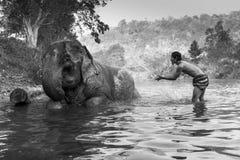 KANJANABURI THAILAND-JANUARY 30: Mahouten visar att spela med en elefant i en flod på Sangkhlaburi, Kanjanaburi, Thailand på Janu Royaltyfria Foton