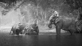 KANJANABURI THAILAND-JANUARY 30: Mahouten visar att spela med en elefant i en flod på Sangkhlaburi, Kanjanaburi, Thailand på Janu Arkivfoto