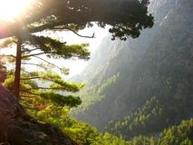 Kanjon av Samaria Royaltyfri Fotografi
