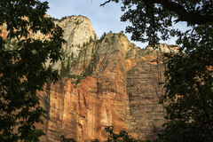 Kanjon i zionnationalpark Fotografering för Bildbyråer