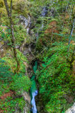 Kanjonen Mostnica med kristallklart vatten Arkivfoto