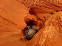 Kanjoner i öknen, Navajoland, Arizona royaltyfri fotografi