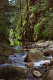 kanjonlynn flod Arkivfoton