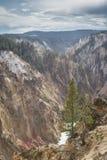 kanjontusen dollar yellowstone Arkivbilder