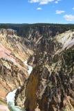 kanjontusen dollar yellowstone Arkivbild