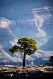 kanjontusen dollartrees Fotografering för Bildbyråer