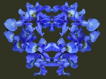Kann als Grußkarte für Valentinstag, Geburtstag verwendet werden blüte Farben des Sommers Blumenblätter der Blumen blau hell Trop Lizenzfreie Stockfotos