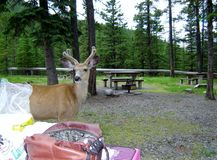 Kann ich Sie für ein Picknick verbinden? stockfotografie