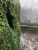 Kannan av vatten vaggar royaltyfri fotografi