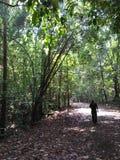 Kanneliya forest road royalty free stock photo