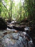 Kanneliya skog royaltyfria foton