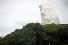 Kannon树 免版税库存图片