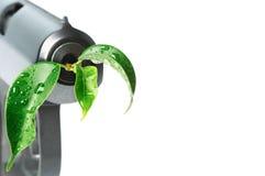 Kanon met groen blad in vat Royalty-vrije Stock Foto's