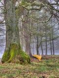 Kanot vid trädet Arkivbild
