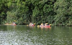 Kanoter på den Hawaii floden royaltyfria foton