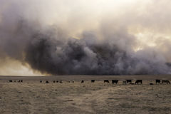 Kansas Grassland Wildfire. A fast moving wildfire consumes dry grassland in Hodgeman County, Kansas Stock Image