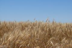 Kansas Landscape Stock Images