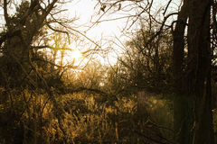 Kansas Nature. Beautiful Kansas nature that almost looks like a forest Royalty Free Stock Photo